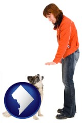 washington-dc map icon and a woman training a pet dog