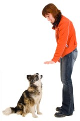 a woman training a pet dog